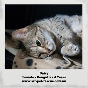 Daisy. Phone******0442