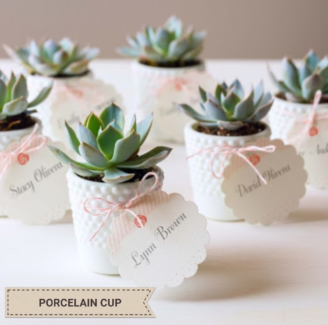 Wedding Favors / Succulent gifts / Baby shower