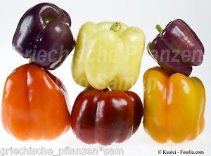 Paprika-Mix-5-Sorten-50-Semillas-purpura-blanco-amarillo-negro-rojo-Chili-Regalo