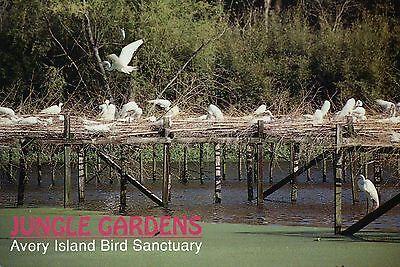 Bird Sanctuary, Avery Island Louisiana, Egrets, Jungle Gardens - Animal Postcard