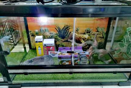 Bearded Dragon / Reptile Set Up - LAY BY NOW FOR CHRISTMAS