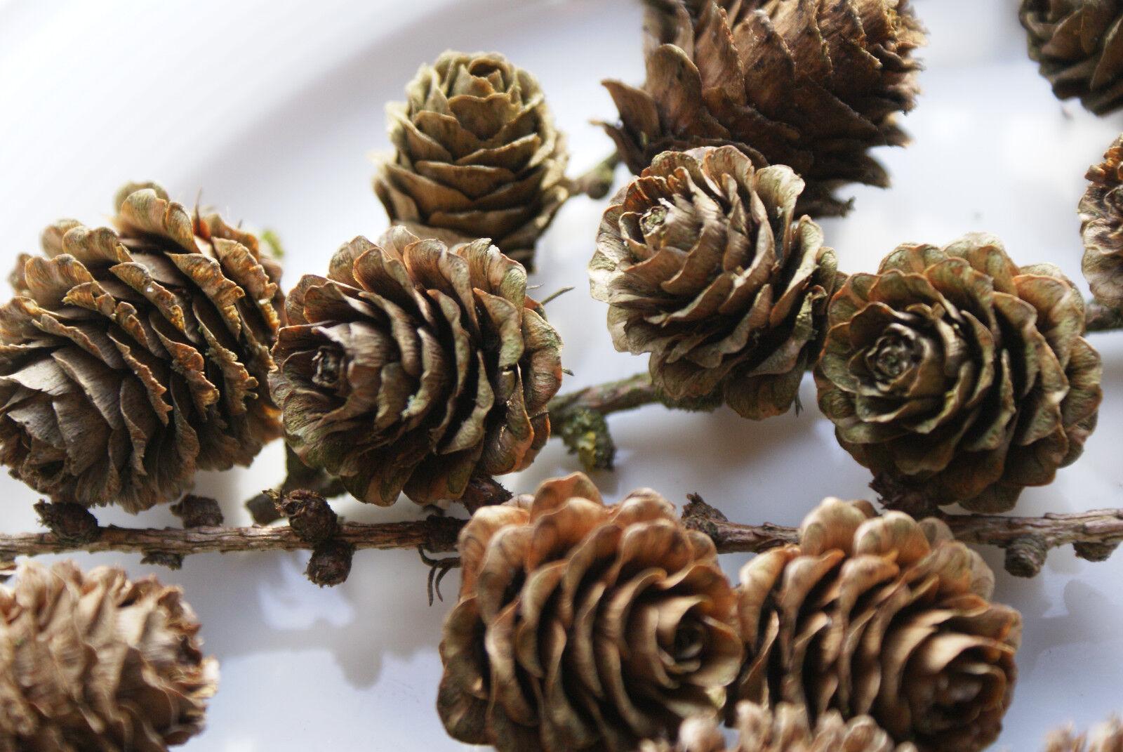 L rchenzapfen l rchenzweige zum basteln floristik deko for Deko zum basteln