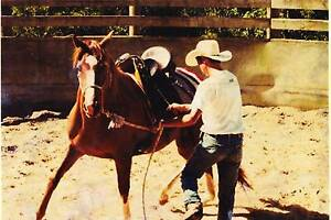 HORSE, TRAINING, BREAKING Mount Crosby Brisbane North West Preview