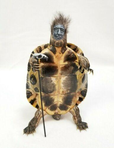 Full body Turtle Taxidermy Gaff Nicolas Cage Reptile Lizard skull Oddity