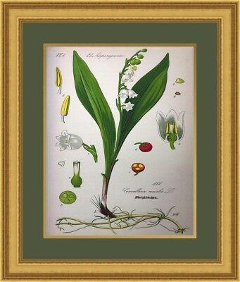 Botanical Giclee Print #1 Beautifully Custom Framed FREE SHIPPING 1 Framed Giclee Print