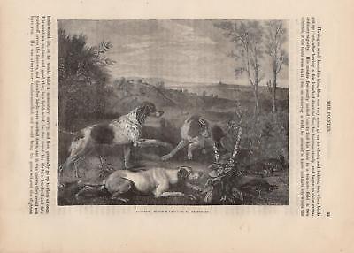 English Pointer Jagdhunde Hunde Hunderasse HOLZSTICH von 1866