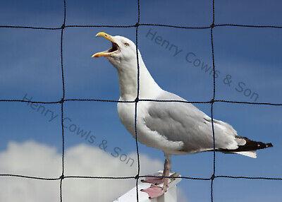 Anti Bird Netting Heavy Duty Garden Net Strong Seagull Thick Mesh 75mm 10M X 20M
