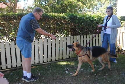 Canine Obedience Training - Positive Reinforcement
