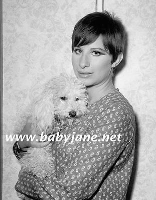 091 BARBRA STREISAND SHORT HAIR W/ DOG IN 1966 PHOTO