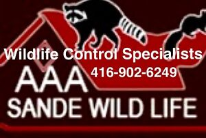 Squirrel, Skunk and Raccoon Removal Specialists-Wildlife Removal