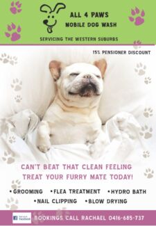 Express dog washing grooming grooming gumtree australia all 4 paws dog wash solutioingenieria Gallery