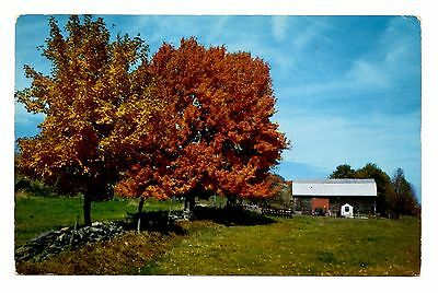Autumn Beauty Vintage Postcard Fall Colors Leaves Changing Barn Fields Unposted