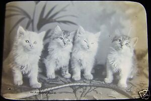 CUTE-Glass-Magic-lantern-slide-FOUR-POSED-VICTORIAN-KITTENS-C1890