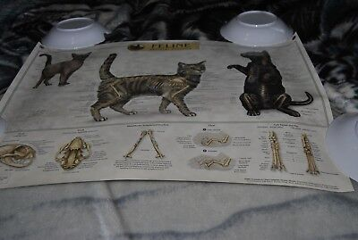 Feline Skeletal Anatomy Wall Chart Poster House Cat 1st Edition