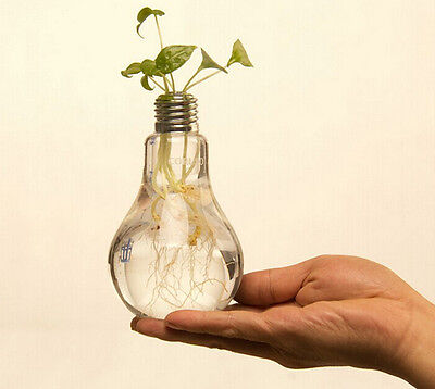 Light Bulb Stand Glass Flower Vase Pot Hydroponic Container Home Wedding Eforce