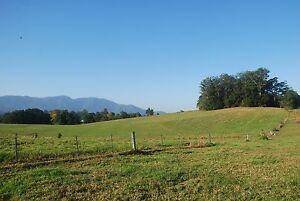 Holidays for Horses Agistment Bellingen Bellingen Area Preview