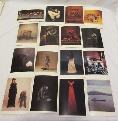 16 William Wegman Weimaraner Dogs in Costume Etc Old Stock Postcards Fotofolio - Weimaraner Costumes