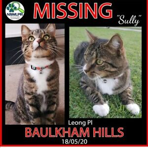 Wanted: Lost Tabby Male Cat Baulkham Hills