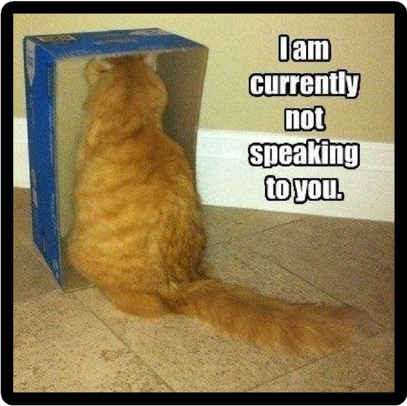 Funny Cat Humor Not Speaking To You Refrigerator Magnet