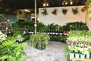 Brunswick Indoor Plant Sale Brunswick Moreland Area Preview