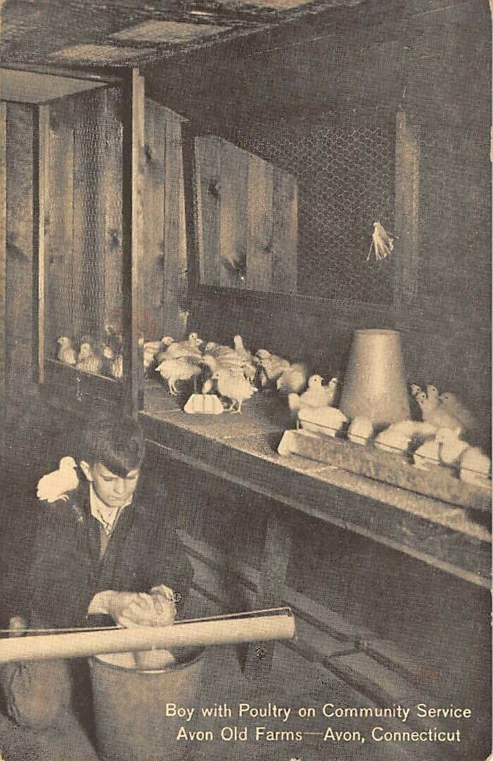 AVON, CT ~ BOY WITH POULTRY ON COMMUNITY SERVICE AT OLD FARMS ~ c. 1940s