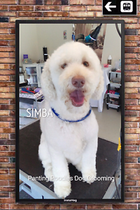 Dog Grooming Murrumba Downs Pine Rivers Area Preview