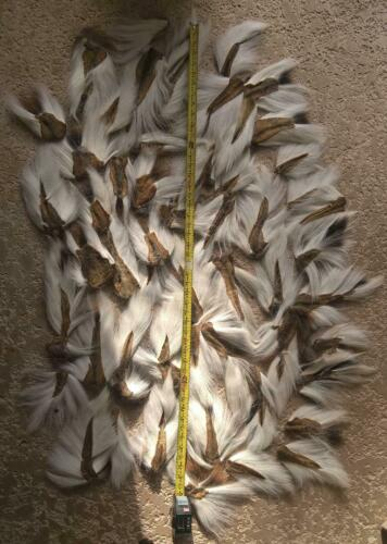 **GREAT DEAL** WHITE Northern  BUCKTAIL Deer Hair Buck Tail for jigs fly tying