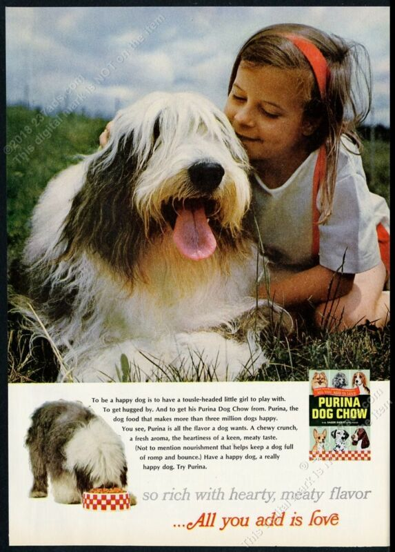 1966 Old English Sheepdog & little girl photo Purina Dog Chow vintage print ad