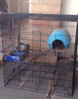 2 rat/ferret cages Gosnells Gosnells Area Preview