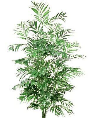 - 6' PHOENIX PALM ARTIFICIAL SILK TREE PLANT BUSH ARRANGEMENT SAGO ARECA DATE FAKE