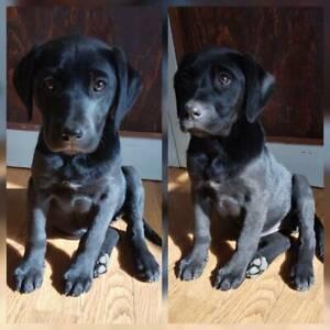 Wangaratta Area, VIC | Dogs & Puppies | Gumtree Australia