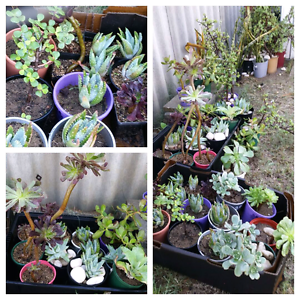 Huge Plant Sale Saturday 1st July Kalamunda Kalamunda Area Preview