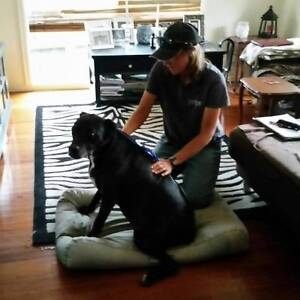 DDW Dog Psychology and Holistic Education Series Melbourne CBD Melbourne City Preview