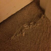 Carpet repair needed