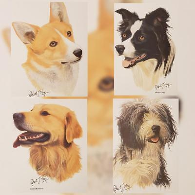 Robert J. May Dog Prints Corgi Golden Poodle Golden Retriever and More