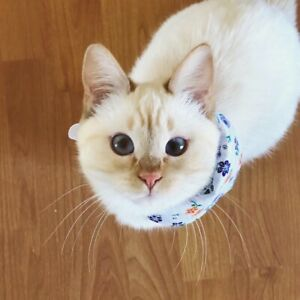 Pet sitter wanted!