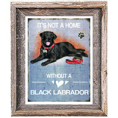 BLACK LABRADOR DOG distressed Art Print 8 x 10 image home wall decor unframed