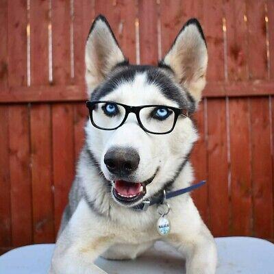 Black Eye Glasses No Lens Pet Prop Children Frames #C17 Nerd Costume ](Kids Nerd Costumes)