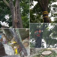TREE REMOVAL/PRUNING - LICENSED & FULLY INSURED - 6473909223