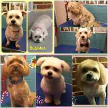 Pampered Pups Dog Grooming - Darch Darch Wanneroo Area Preview