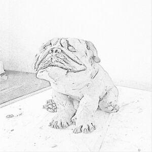 looking for olde or english bulldog puppy / young