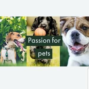 dogs in Geelong Region, VIC | Dogs & Puppies | Gumtree Australia