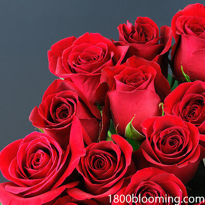 Valentines Day Fresh Cut Red Roses Flower Delivery Bouquet Event Party Diy Bulk