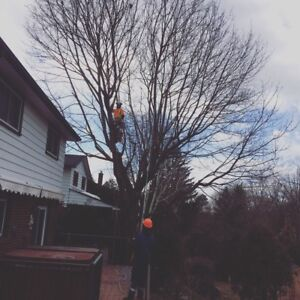 Mercier's Tree Service