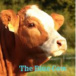 bluecowclothing