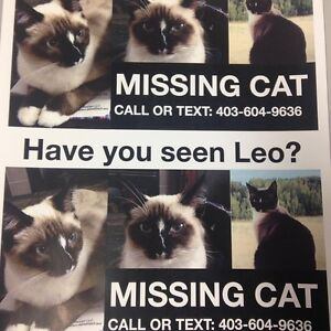 Missing Cat in Monterey Park