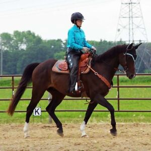 Horse riding lessons in Winnipeg