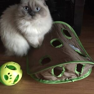 Looking for a friend for my cat