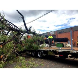 Richmond  tree & stump removal (free quotes)