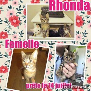 Adoption de chatons et chats